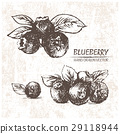 Digital vector detailed blueberry hand drawn 29118944