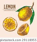 lemon hand drawn 29118955