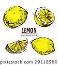 lemon hand drawn 29118960