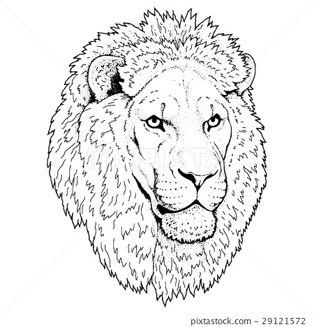 Beautiful lion artwork. Detailed.African predator. 29121572