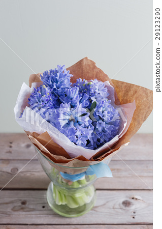 blue hyacinth In a glass vase on wooden table and 29123290