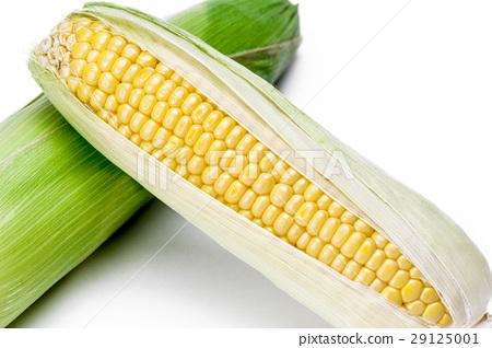 玉米 29125001