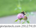 Honey bee 29127419