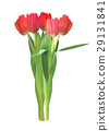 Realistic Vector Illustration Colorful Tulips 29131841