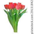 Realistic Vector Illustration Colorful Tulips 29131842