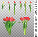 Realistic Vector Illustration Colorful Tulips 29131843