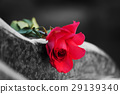 Rose on the tombstone 29139340