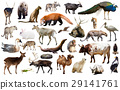 animal, collection, carnivore 29141761