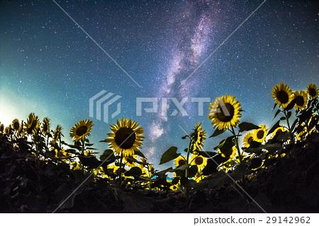 해바라기와 은하수 29142962