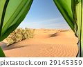 View from camp on sand dunes Merzouga, Morocco 29145359