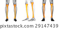 3D rendering medical illustration of the tibia 29147439