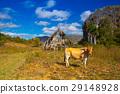 Famous Cuba farmland tobacco area 29148928