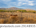 Farm animals on pasture on Trinidad countryside 29148935