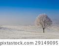 Snow and hoarfrost covered trees  29149095