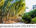 Walking path in Longjing 29149752