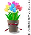 鬱金香 花朵 花 29151211