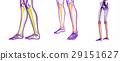 tibia bone 29151627