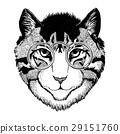 动物 猫 猫咪 29151760