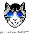 动物 猫 猫咪 29151762