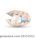 bright pearl in a opened sea shell  29152551
