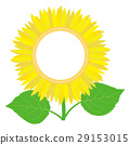 sunflower, sunflowers, photo 29153015