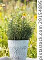 leaf, thyme, herb 29154895