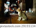 貓 29155134