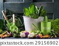 Green salads, cabbage, colorful veggies 29156902