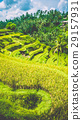 Amazing Tegalalang Rice Terraces on Morning Sun 29157931