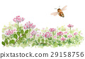 Astragalus field and bee 29158756
