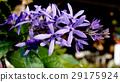 开花 花朵 花 29175924