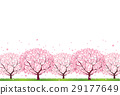 Cherry Blossoms 29177649