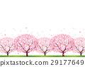 ดอกซากุระบาน,ซากุระบาน,ดอกไม้บานเต็มที่ 29177649
