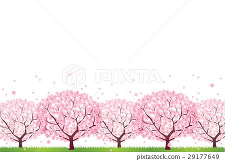 櫻桃樹 29177649