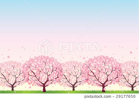 櫻桃樹 29177650