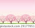櫻桃樹 29177651