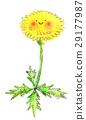 蒲公英 花朵 花 29177987