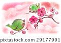 꾀꼬리의 봄 29177991