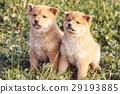 可愛的小狗 29193885