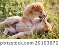 可愛的小狗 29193972