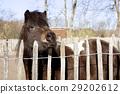animal, animals, fence 29202612