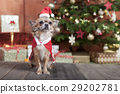 christmas dog before christmas tree 29202781