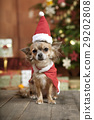 christmas dog with stocking cap 29202808