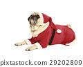 pug in santa costume lying 29202809