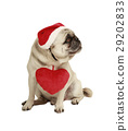 dog with hat and heart 29202833