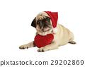 pug santa claus cap heart 29202869