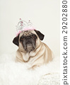 are pug portrait crown 29202880