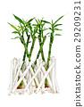 Bamboo 29209231