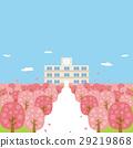 봄 벚꽃 가로수 만개 학교 29219868