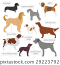 Hunting dog breeds collection isolated on white 29223792